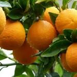160414_orange