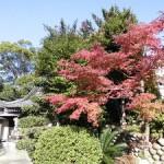 161126_神社の紅葉