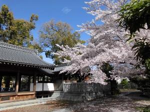 Googleマップに載っていない神社と桜